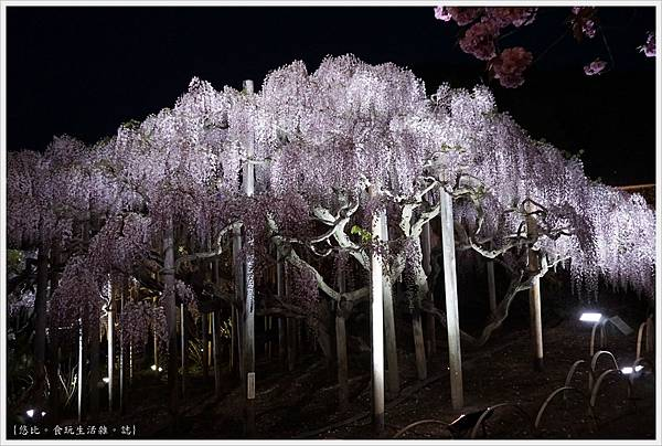足利花卉公園-125.JPG