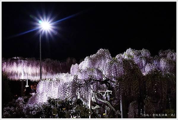 足利花卉公園-137.JPG