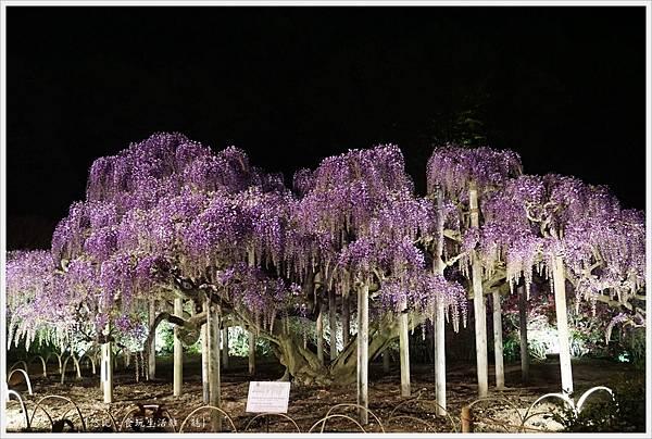 足利花卉公園-139.JPG