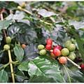 鹿篙咖啡-3.JPG