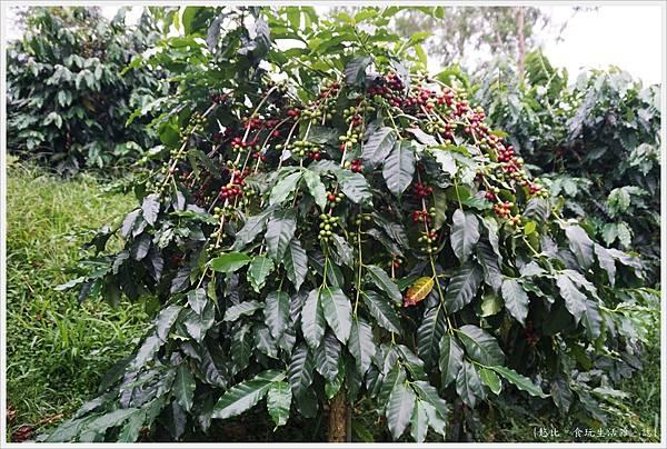 鹿篙咖啡-55.JPG