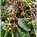 鹿篙咖啡-58.jpg