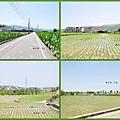 Golden town8.jpg