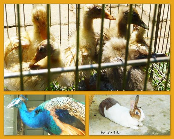動物6.jpg