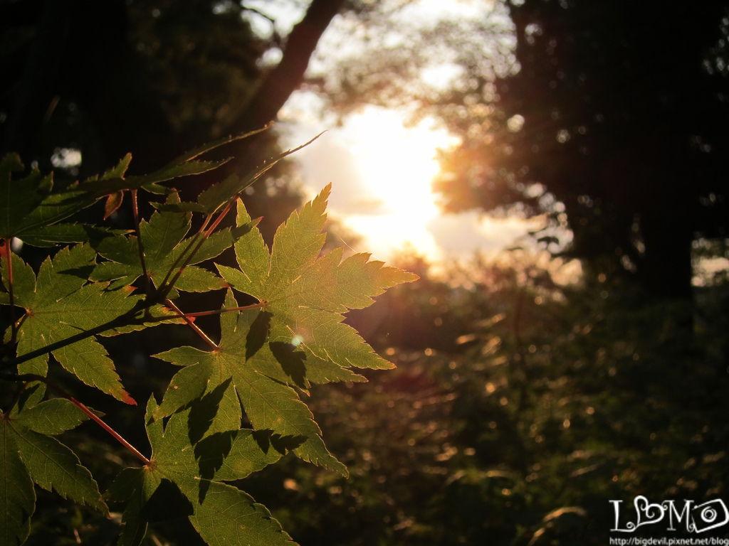 2011.10.05~10黑部旅遊 268.jpg