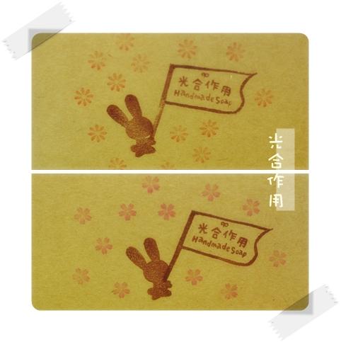 兔兔封面.jpg