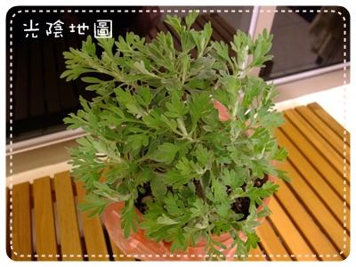 20100311湯圓代為照顧的植物.jpg