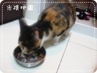 20100402喵喵吃嬰兒食品.jpg