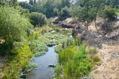 Alamo Creek