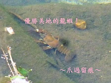 優勝美地的龍蝦