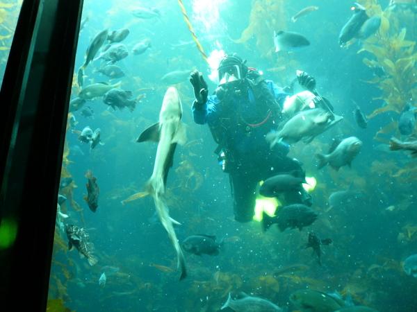 餵鯊魚吃烏賊