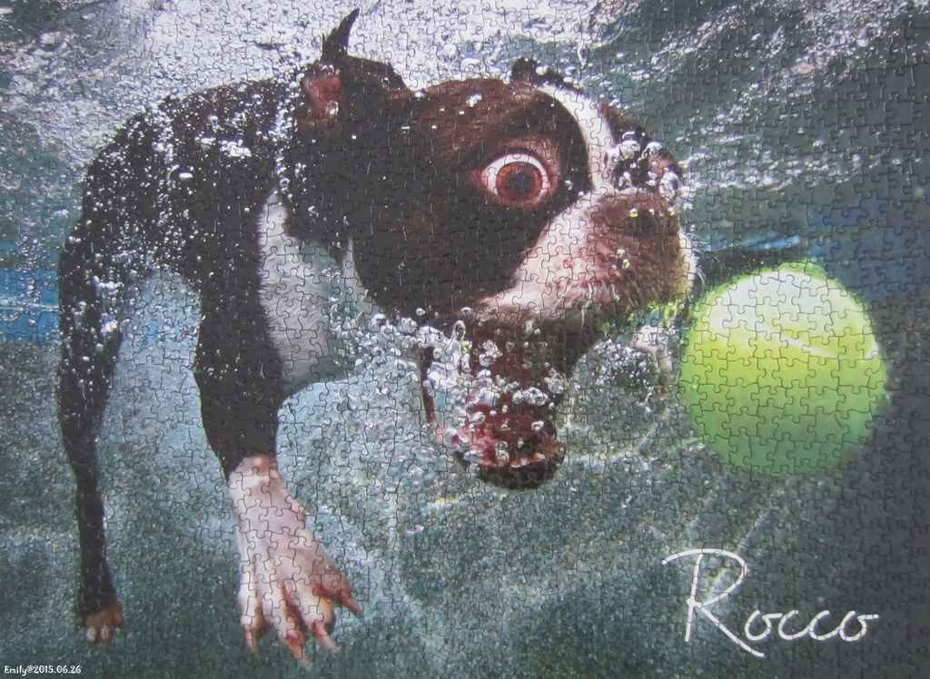 《艾‧拼圖-365》Underwater dogs.jpg