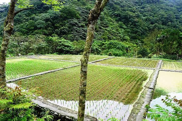 頭城農場082