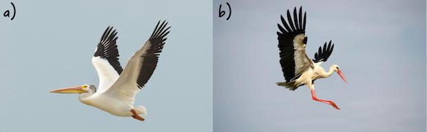 Storks(2).jpg