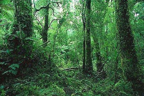 原始叢林1