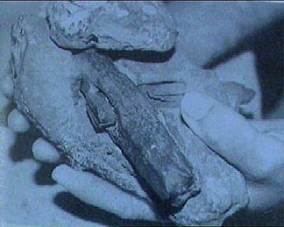 0.65億年前金屬管