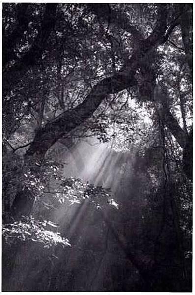 得巴扇森林