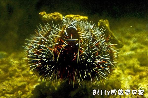 國立海洋生物博物館002.jpg