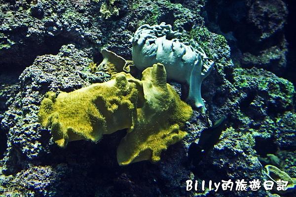 國立海洋生物博物館019.jpg