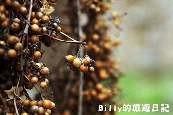 花卉圖片22.JPG