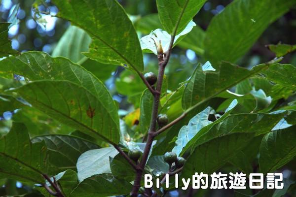 四腳亭砲台139