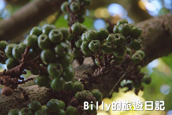 四腳亭砲台143