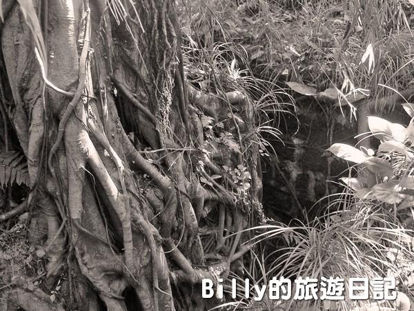 獅球嶺東砲台012