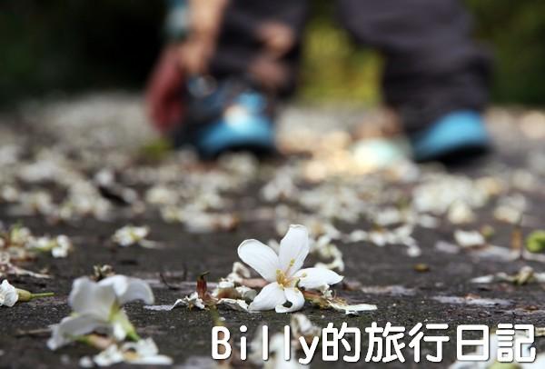 基隆油桐花季201303