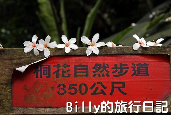 基隆油桐花季201313