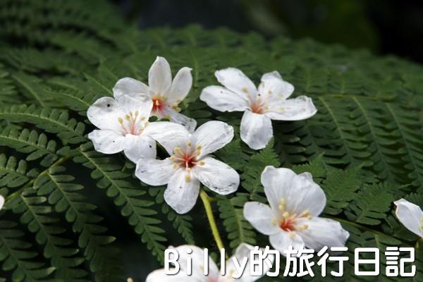 基隆油桐花季201320