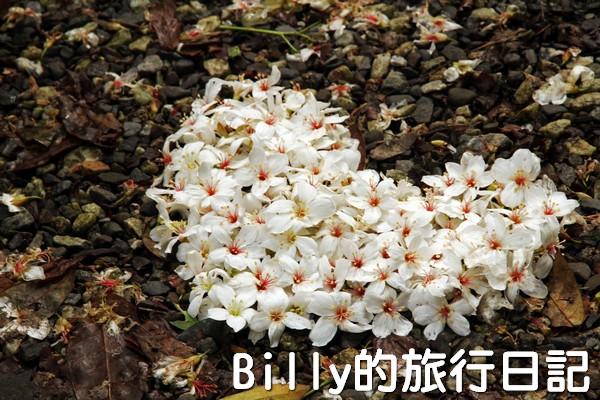 基隆油桐花季201321