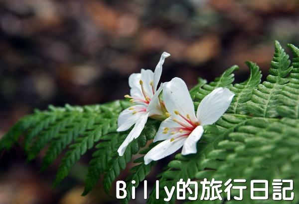 基隆油桐花季201322