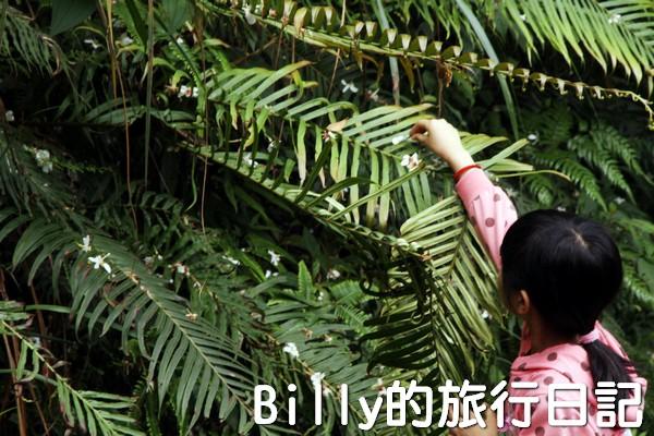 基隆油桐花季201328