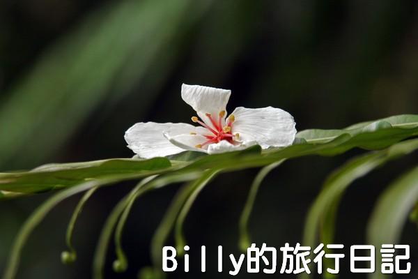 基隆油桐花季201330