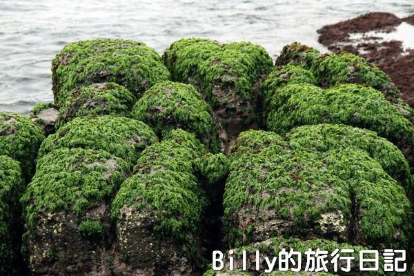 基隆和平島綠魔菇09