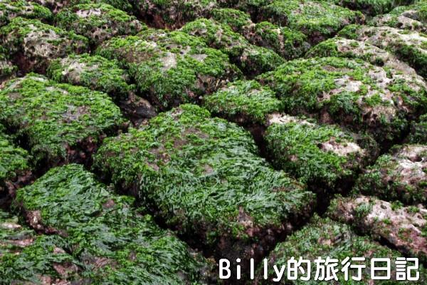 基隆和平島綠魔菇19