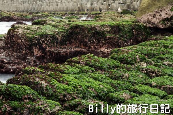 基隆和平島綠魔菇20