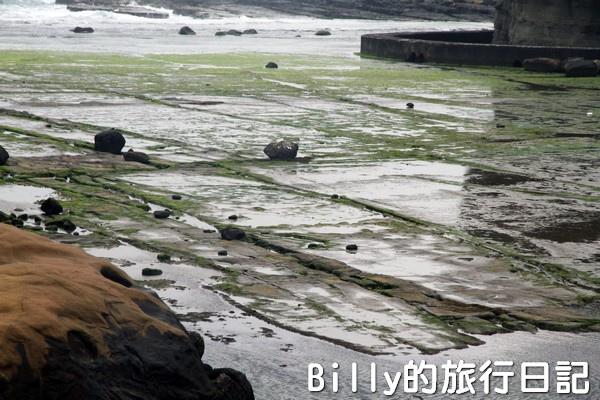 基隆和平島綠藻07.jpg