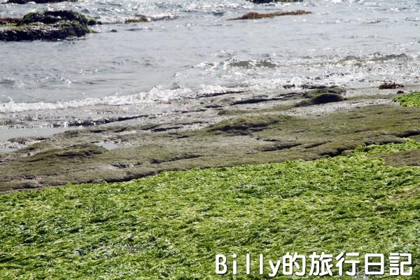 基隆和平島綠藻10.jpg