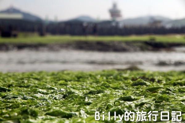 基隆和平島綠藻11.jpg