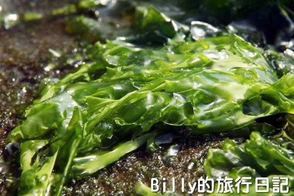基隆和平島綠藻13.jpg