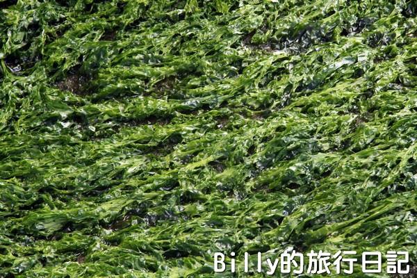 基隆和平島綠藻14.jpg