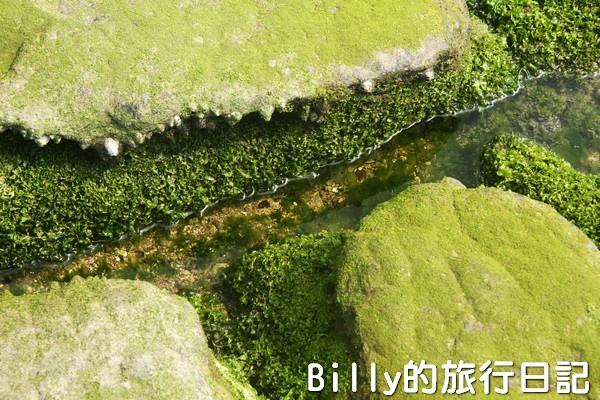 基隆和平島綠藻16.jpg