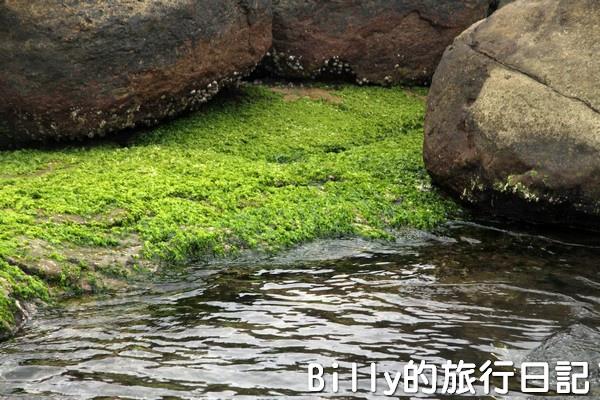 基隆和平島綠藻18.jpg