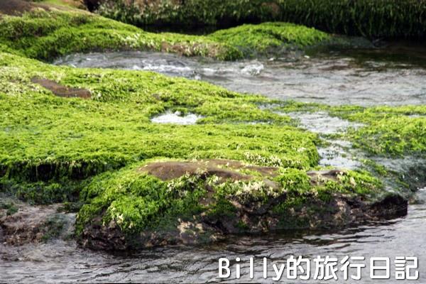 基隆和平島綠藻19.jpg