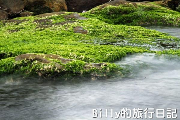 基隆和平島綠藻20.jpg