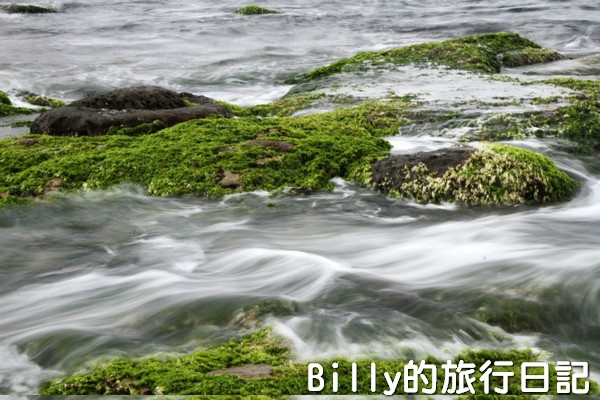 基隆和平島綠藻23.jpg
