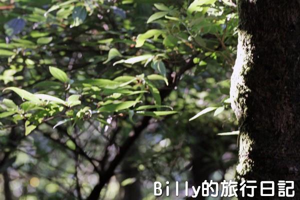 陽明山國家公園 - 二子坪步道009.jpg