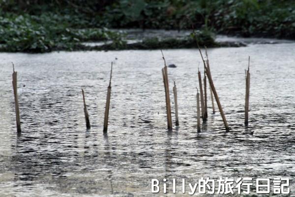 陽明山國家公園 - 二子坪步道023.jpg