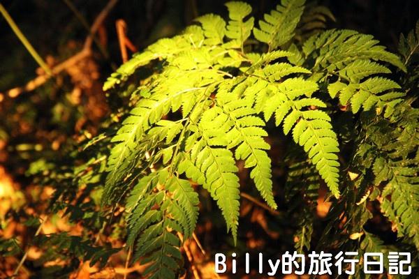 陽明山國家公園 - 二子坪步道031.jpg